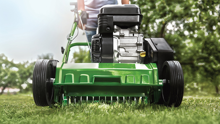 Revitalise your lawn